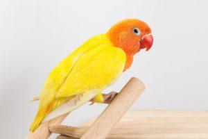 Amantes de las Aves # 1